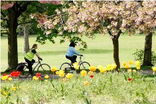 photo of 2 women riding bikes under a blossom tree